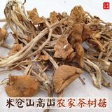 开伞茶树菇250克食用菌杨树菇干货农家特产嫩香菇茶薪菇无硫